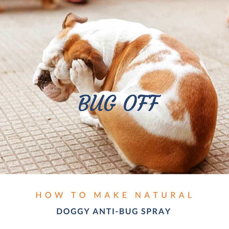 canine_muscleworks_bug_spray_dogs.png