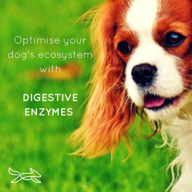 canine_muscleworks_digestive_enzymes