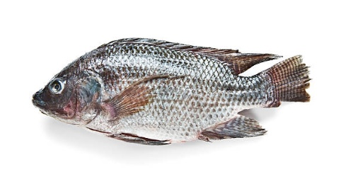 Tilapia: Avoid at all costs!