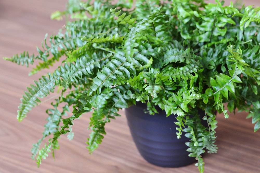 9 Great Plants For The Office Environment PLATF9RM