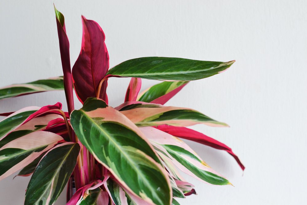 9 Great Plants For The Office Environment — PLATF9RM on perennials with leaves, weeds with leaves, vegetables with leaves, seeds with leaves, animals with leaves, flowers with leaves, birds with leaves, bonsai with leaves, mushrooms with leaves, palms with leaves, bamboo with leaves, gardens with leaves, vines with leaves, succulents with leaves, marigolds with leaves, spring with leaves, pumpkins with leaves, lilies with leaves, trees with leaves, berries with leaves,