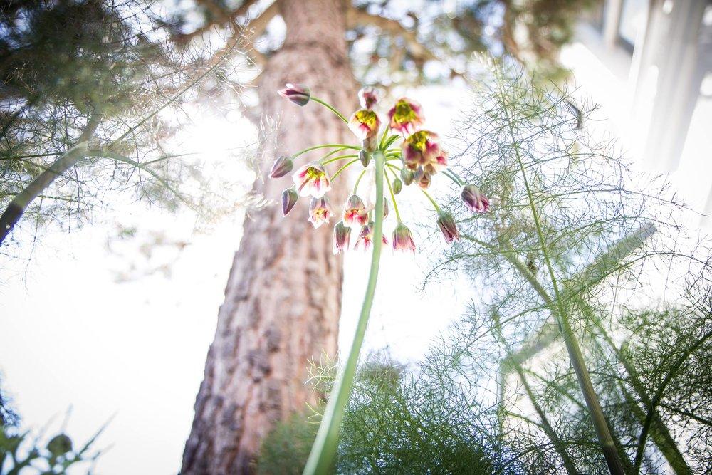 Heidi Joyce Gardens01.jpg