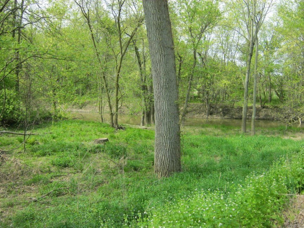 dis1106-beautiful-riverfront-wooded-property-nw-ohio-lots-of-potential-5.jpg