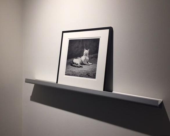 katt utst amsterdam 17 _2.jpg