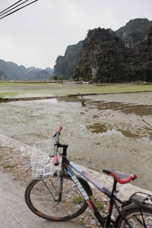 bike ride through rice fields
