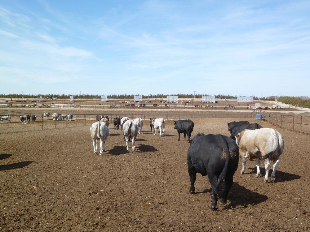 Toro Ranch in Broken Bow, NE