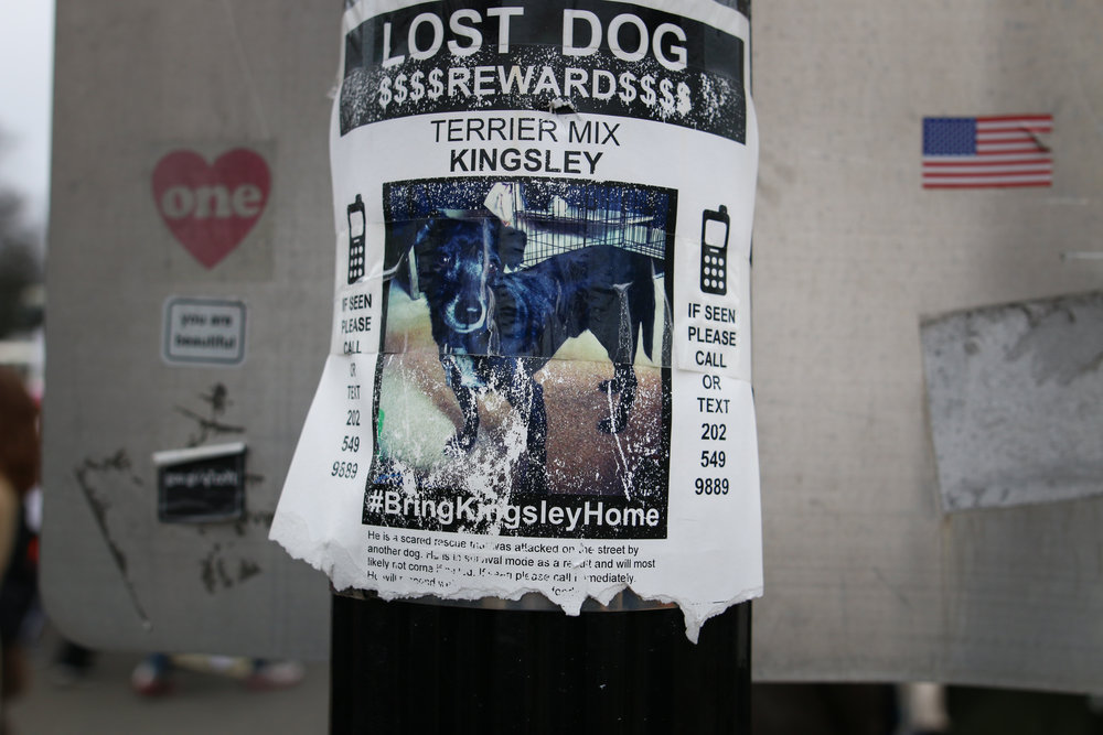 Also, if you live in the DC area, maybe keep an eye out for this lost pup.