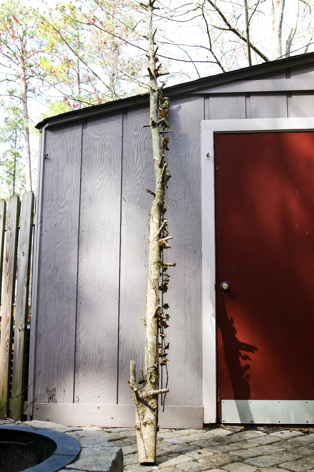 How to start a fire Rooted NC-3440.jpg
