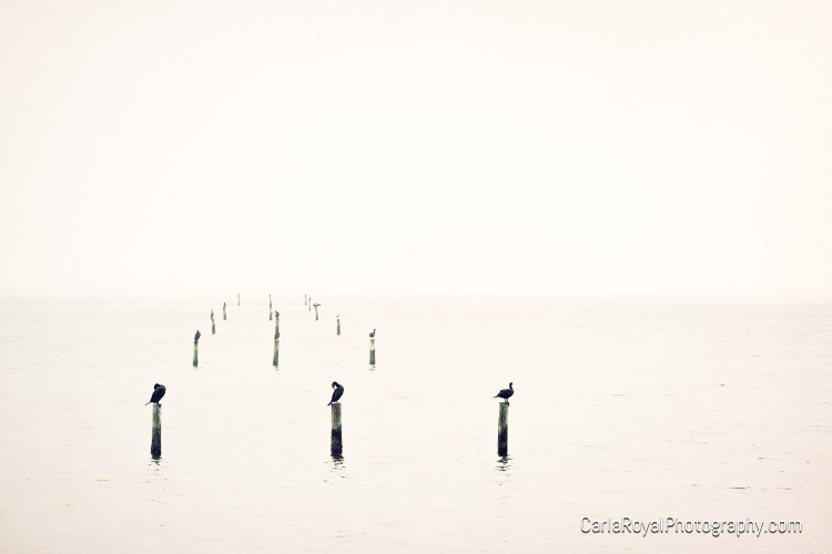 dunedin-pier-birds-fog.jpg