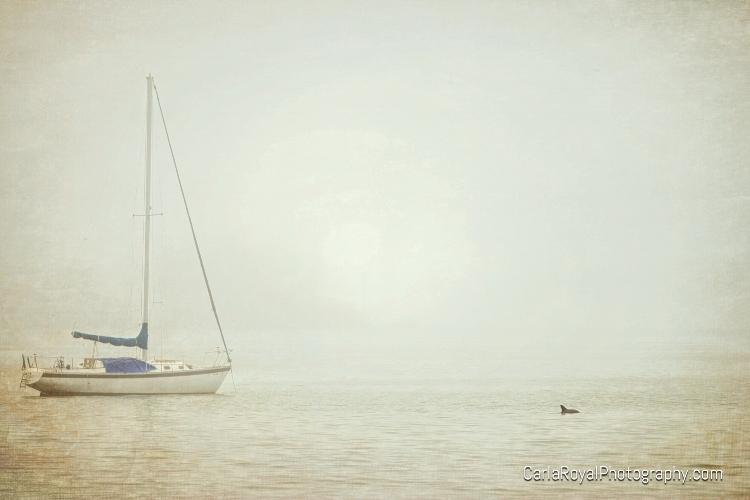 dunedin-sailboat-dolphin-fog.jpg