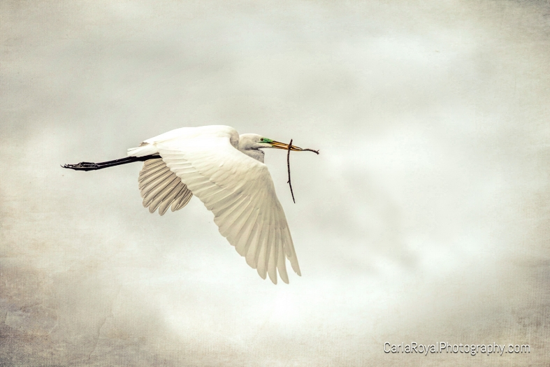 egret-ding-darling-refuge-sanibel-island-2.jpg