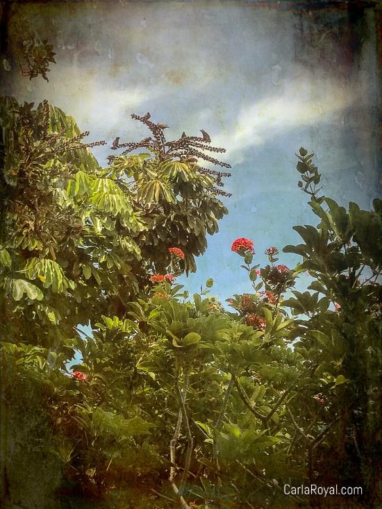 dunedin-trees-flowers.jpg