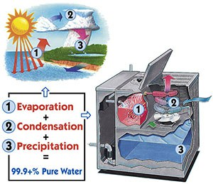 Nature's Process of Constant Purification