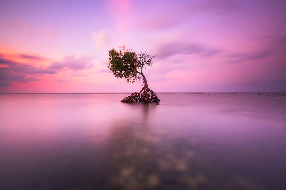 Pemuteran Sunset   A long exposure at sunset of a mangrove on the edge of the Bali Sea in Pemuteran