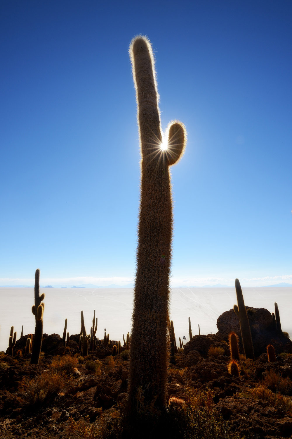 Isla dos Pescadores   The sun slowly goes down above the cactus-covered Isla dos Pescadores on the Salar de Uyuni
