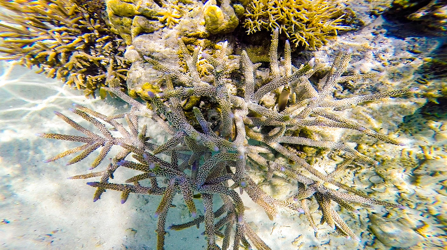 Underwater19.jpg