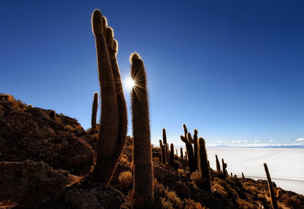 Cactus-on-Incahuasi-island-Salar-de-Uyuni-III.jpg