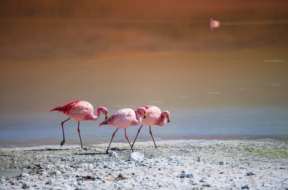 10b-Flamingos-on-Laguna-Hedionda.jpg