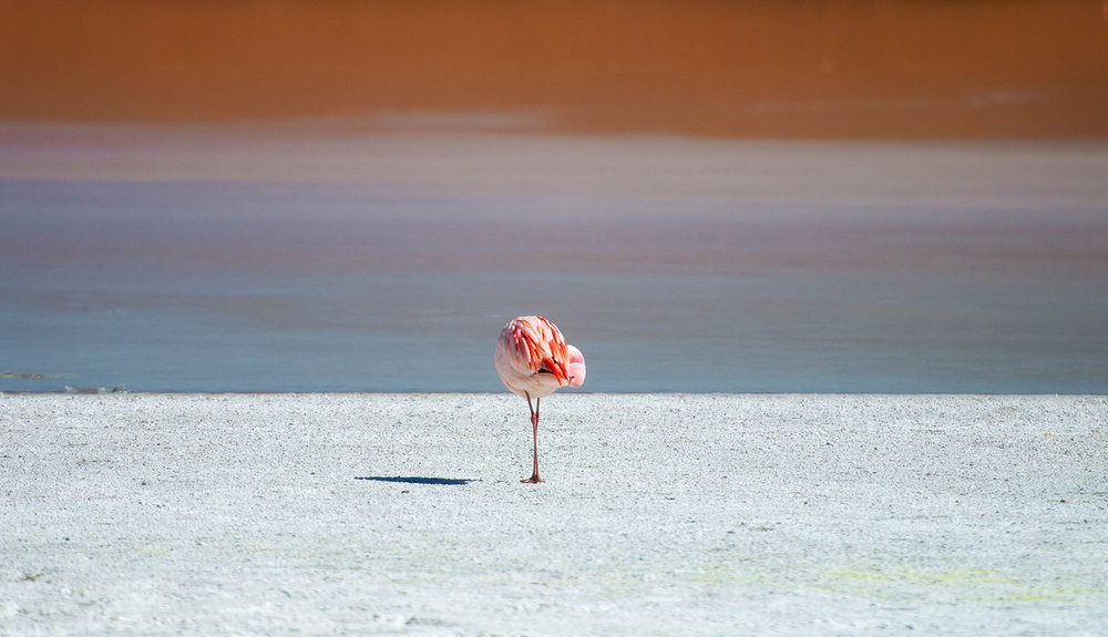 10-Flamingos-on-Laguna-Hedionda.jpg