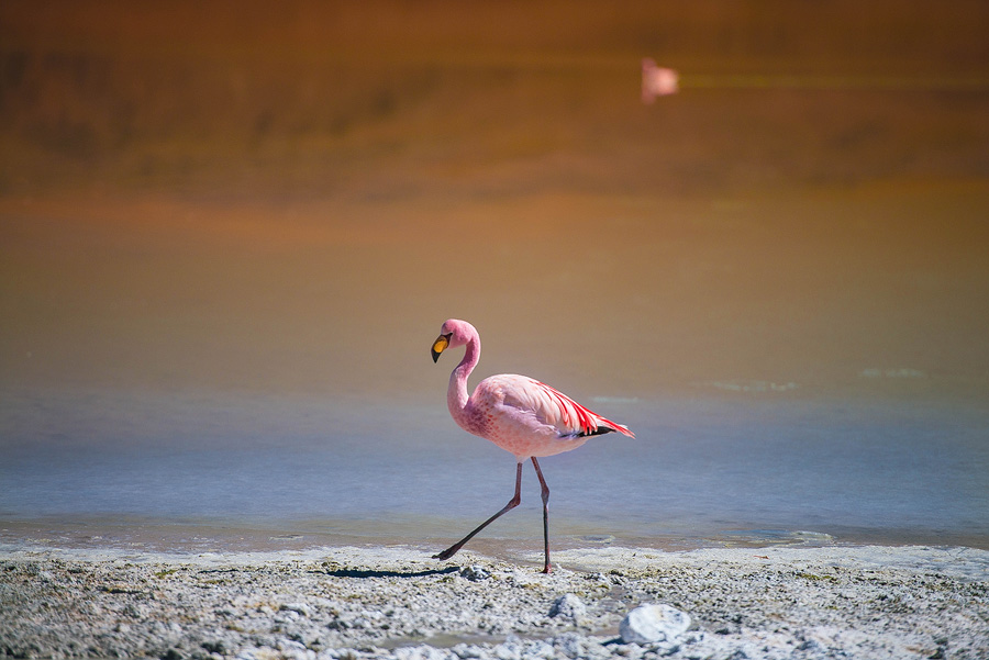 10c-Flamingos-on-Laguna-Hedionda.jpg