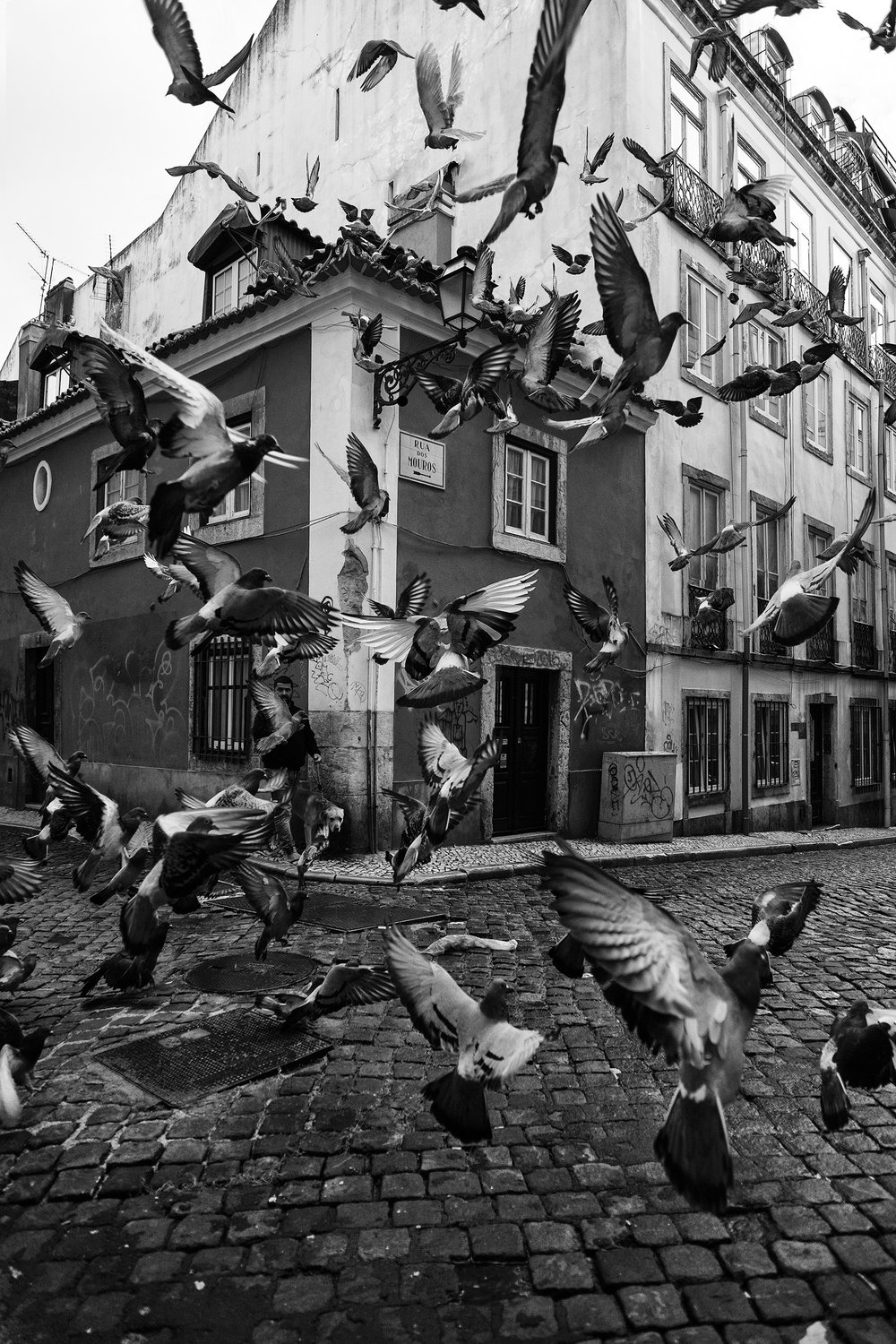 The Birds Pigeons take to the skies as a man walks his dog in the streets of Bairro Alto, Lisbon