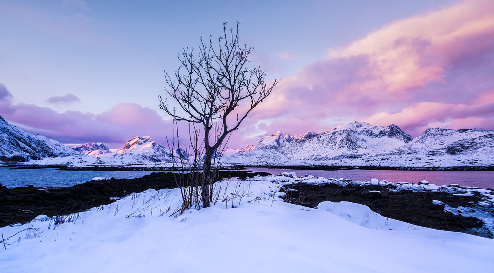 Fredvang tree.jpg