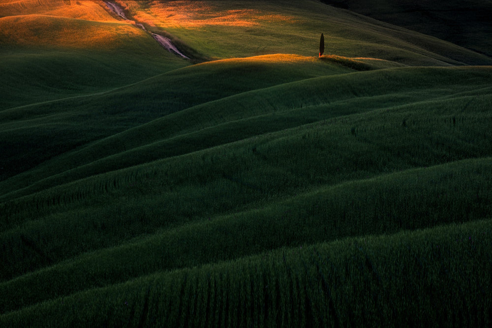 The last light of day picks out a lone tree on one of the many hills surrounding San Quirico d'Orcia.