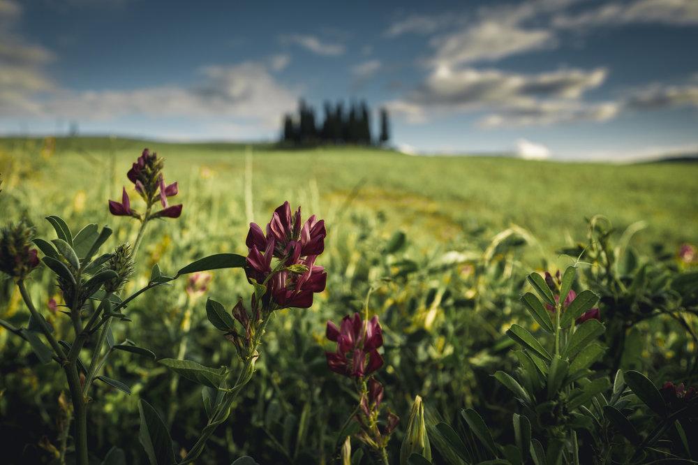 Tuscany-5 copy.jpg