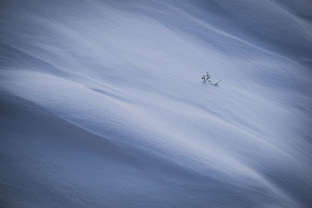 snowabstract4.jpg