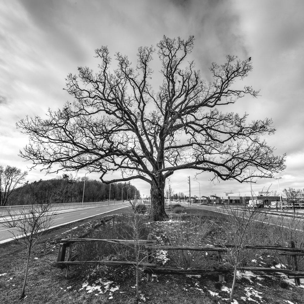Oak(Ville)
