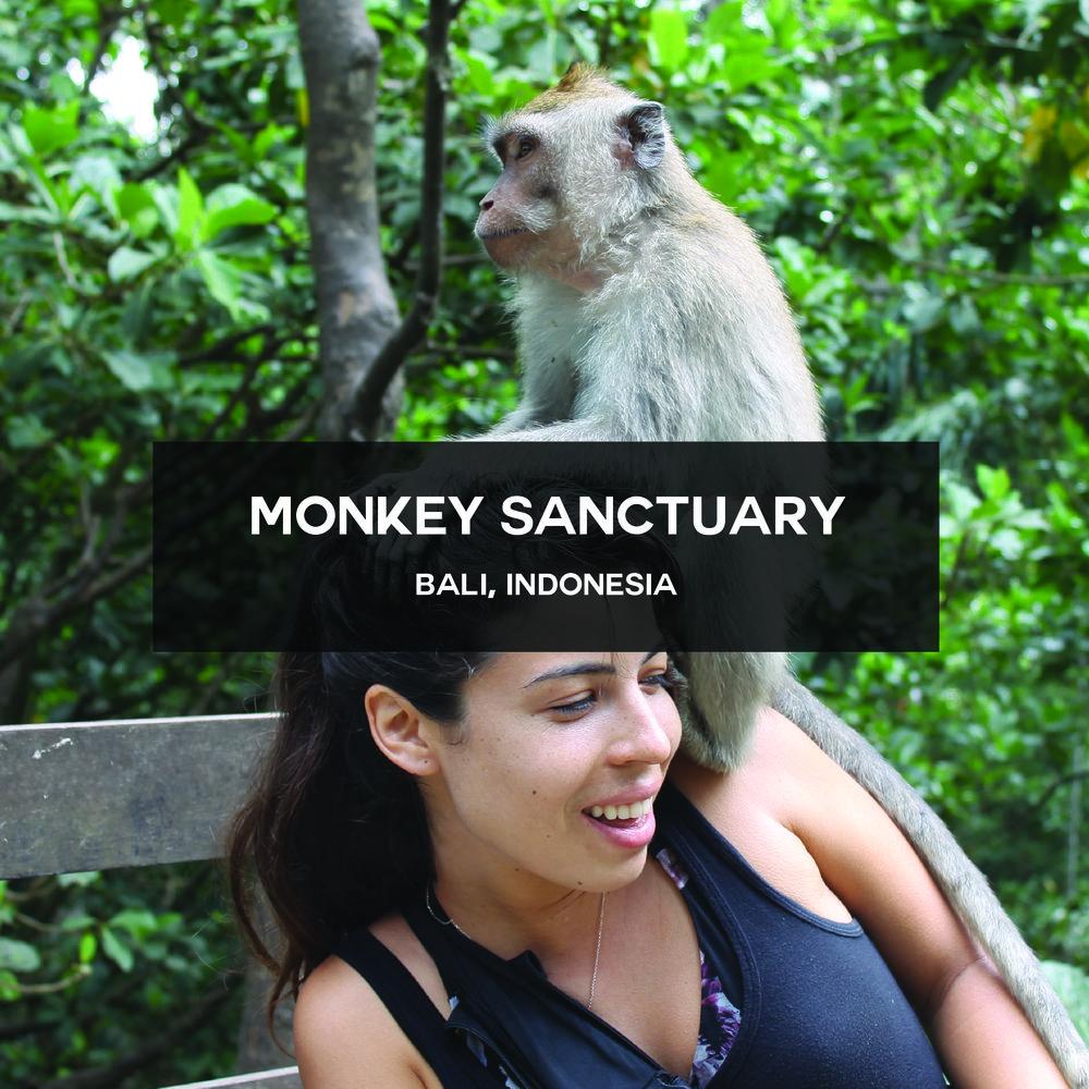 Monkey Sanctuary.jpg