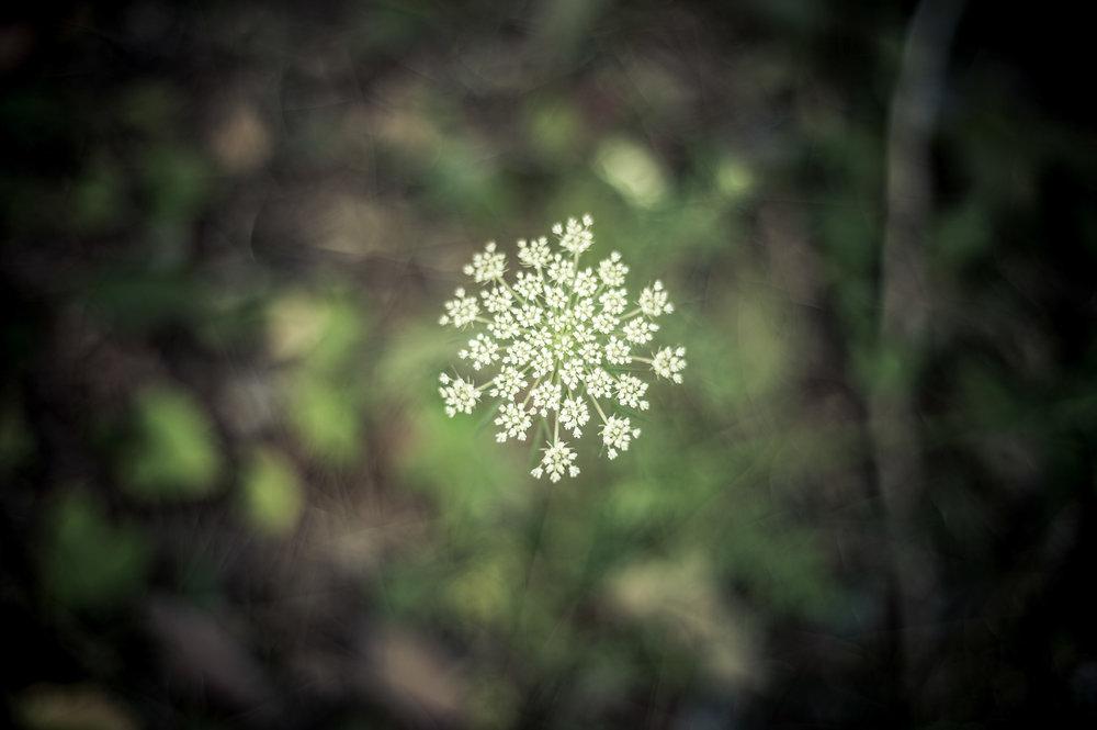 7-nature-+.jpg