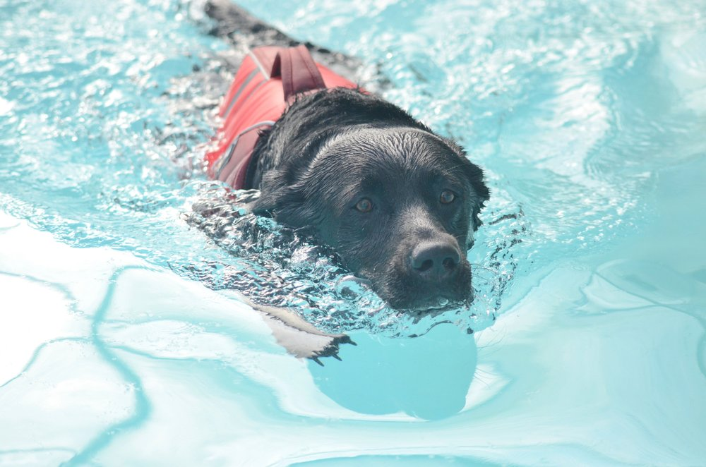Canine Hydrotherapy and Rehabilitation clinic in Lincolnshire