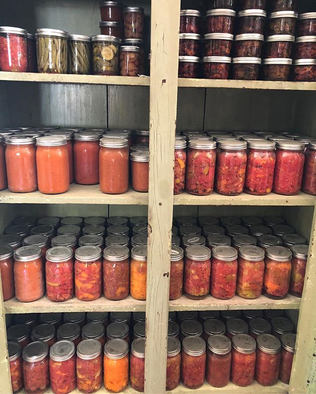 Tomatoe madness is strong at #terraamicofarms 🍅 #organicfarming #growwhatyoueat #heirloomtomatoes #cannedtomatoes #organic #farmtotable