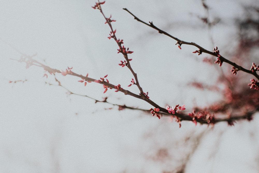 springbreak-38.jpg
