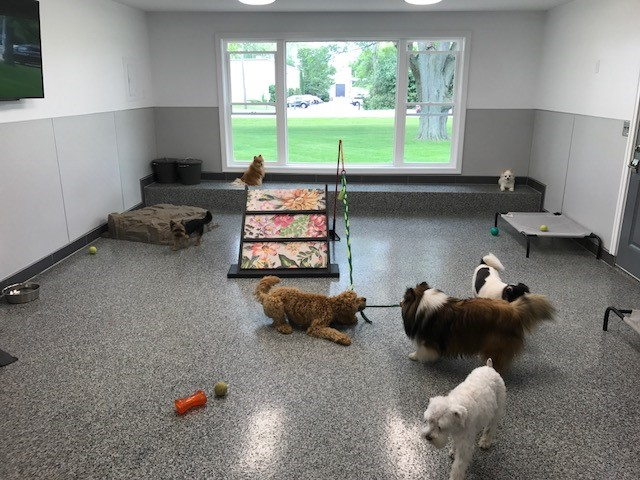 dog play room large dogs enjoy supervised off leash daycare time outside in our fencedin playground that has an aglity dog daycare perrysburg pet lodge spa