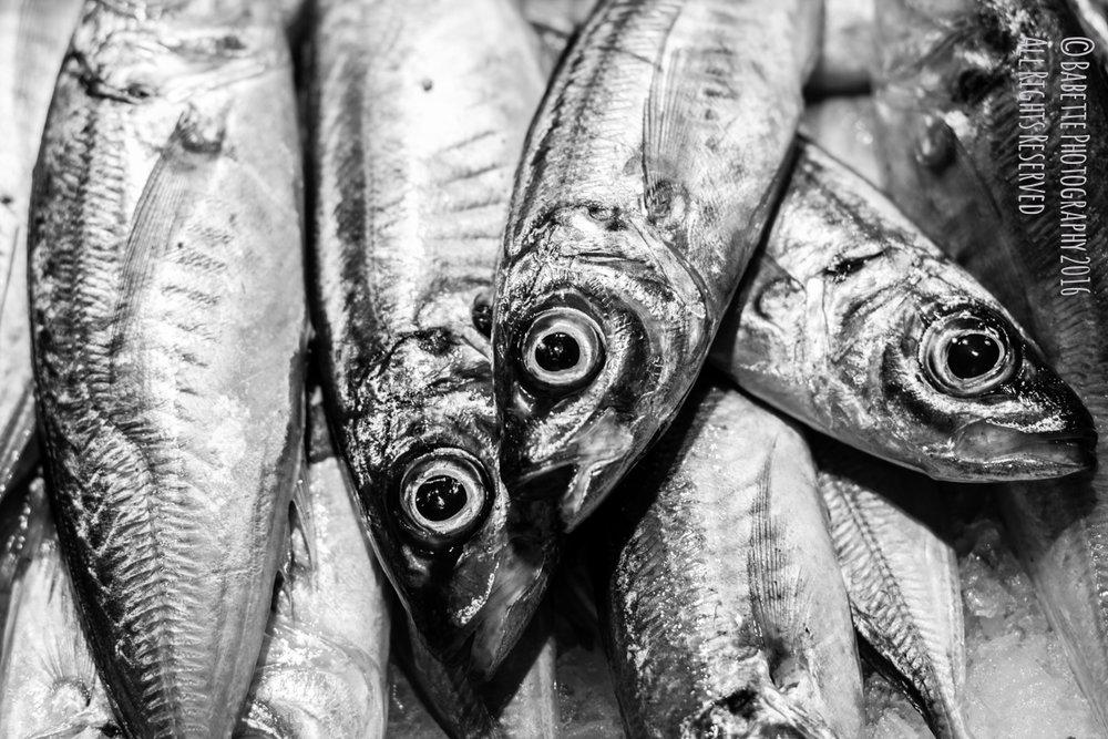 babette photography_barcelona_travels_fish-0646.jpg