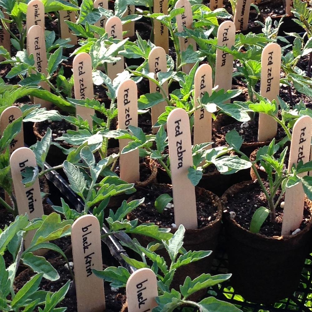 plant-tags.JPG
