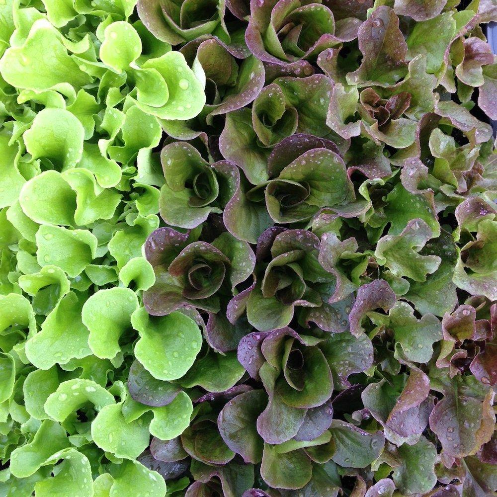 lettuce cake.JPG