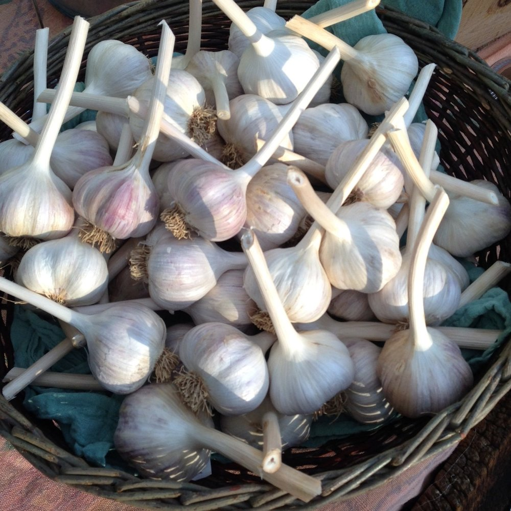 garlic basket.JPG
