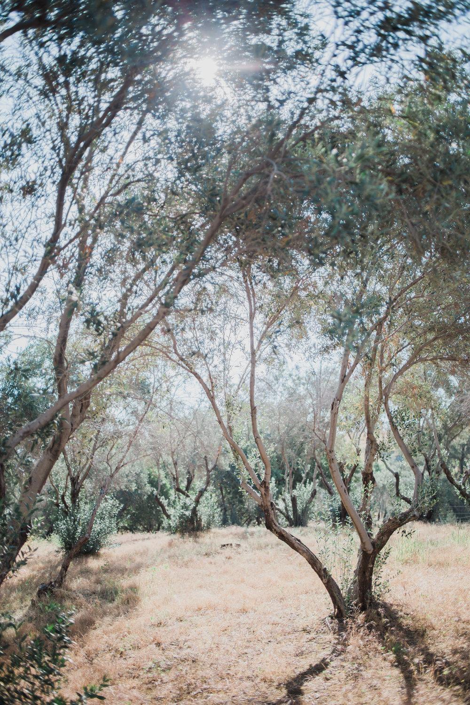 Israel348.jpg