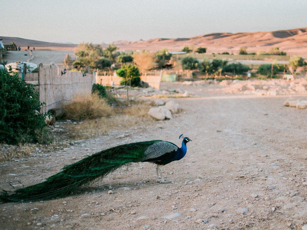 Israel378.jpg