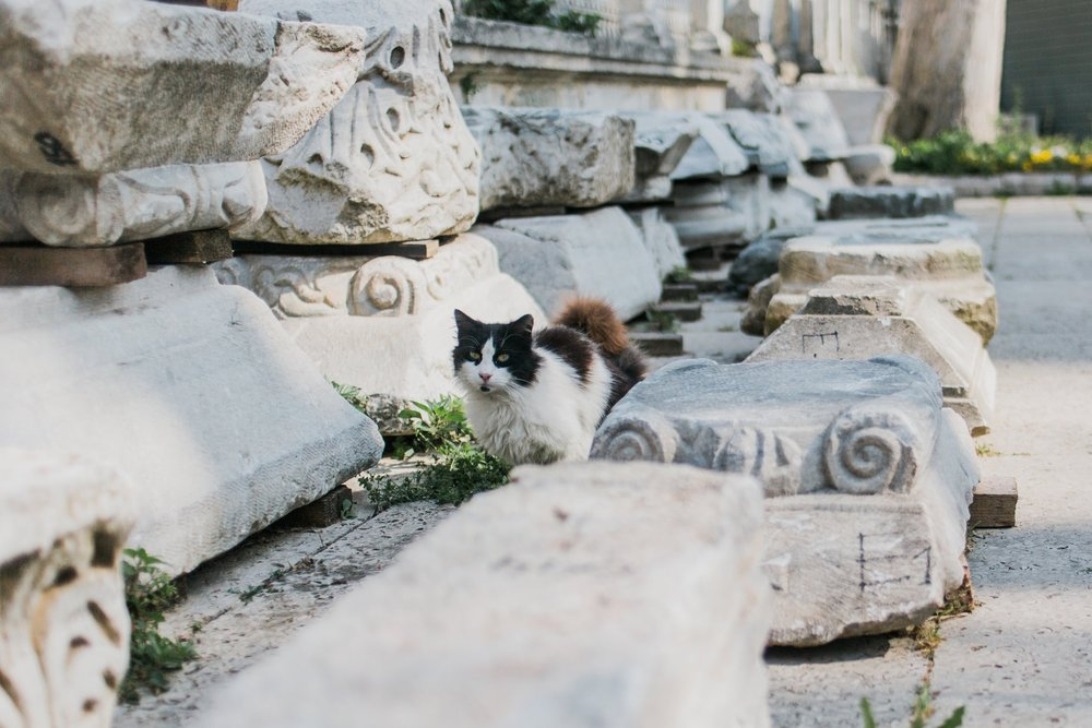 Cat in the courtyard of the Hagia Sophia