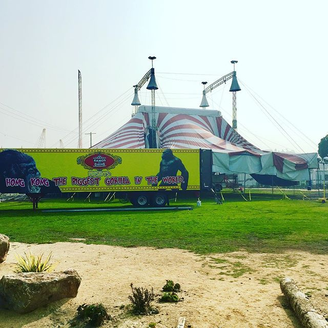Circus is coming! Circus is coming! @circusbella team are not allowing the smoke to stop them from putting up their tent! @merseasf is OPEN... so bring your masks and dine with us! You STILL have to eat! #merseasf #treasureisland #open #circus