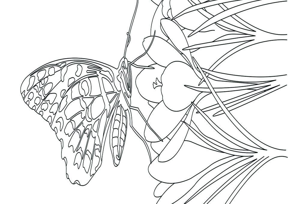 Butterfly_front.jpg