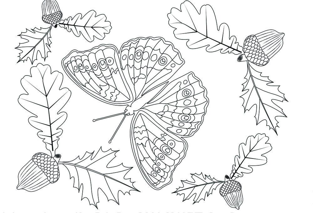 Butterfly2_front.jpg