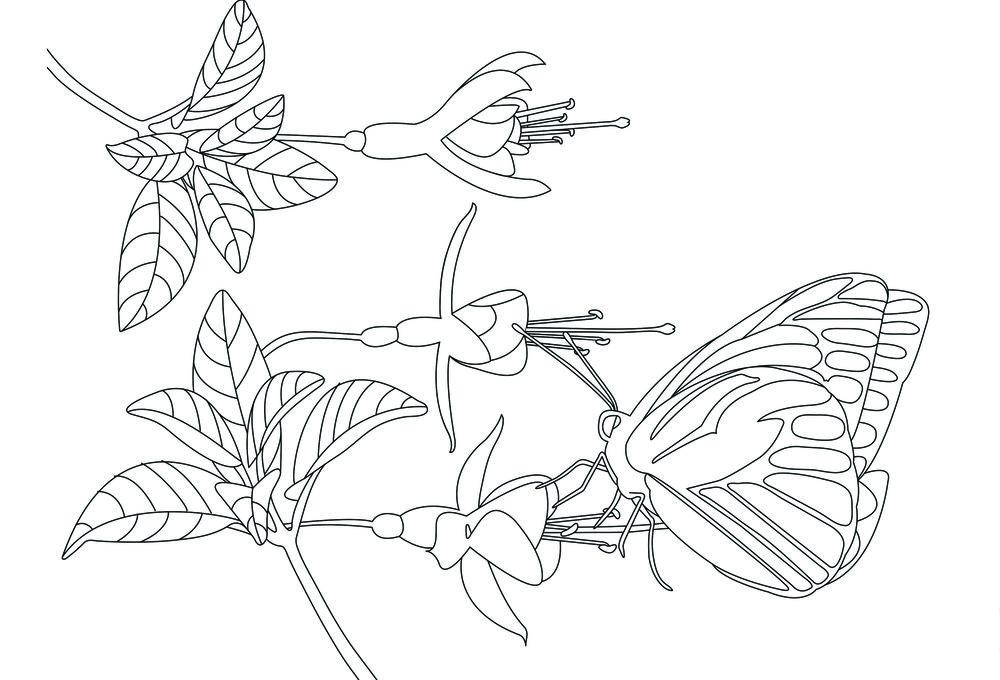 Butterfly3_front.jpg
