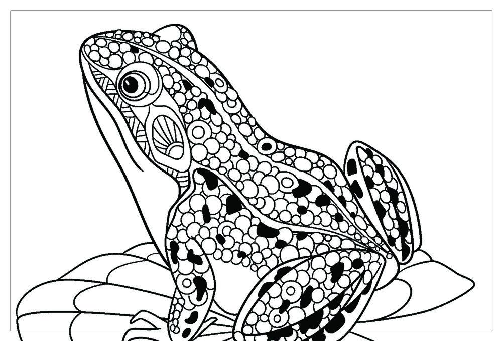 Frog_front.jpg