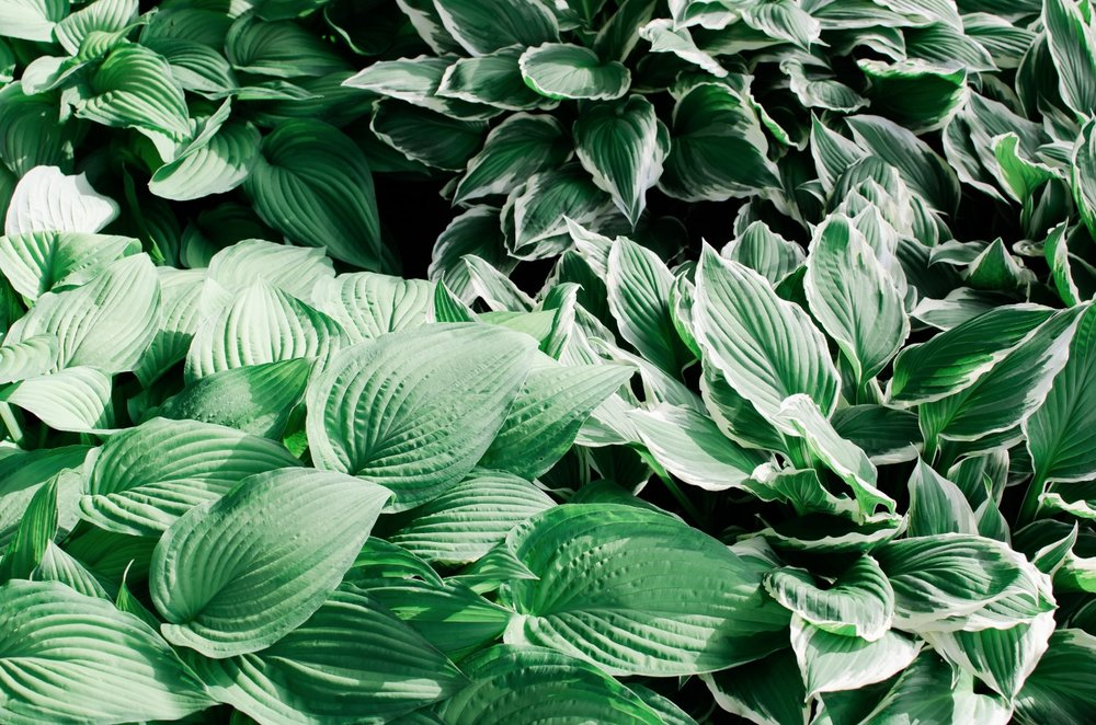 Colour-8452.jpg