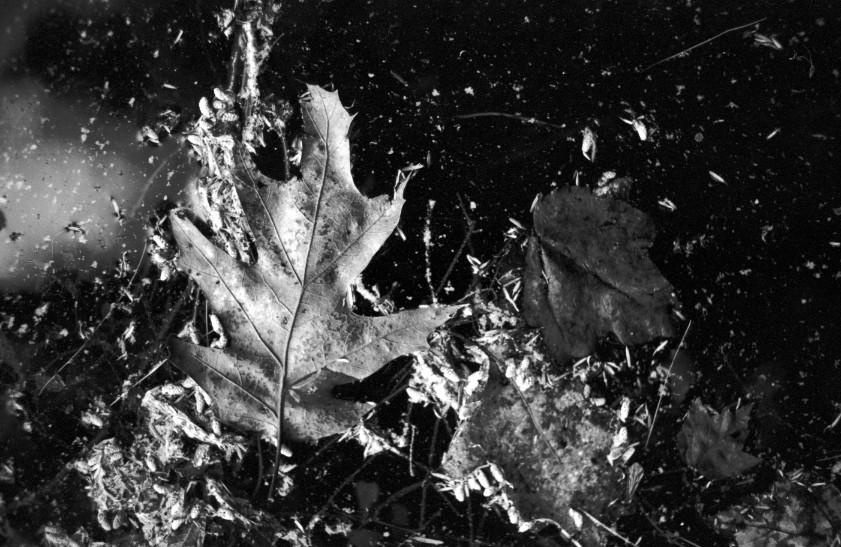 Black&White--14.jpg